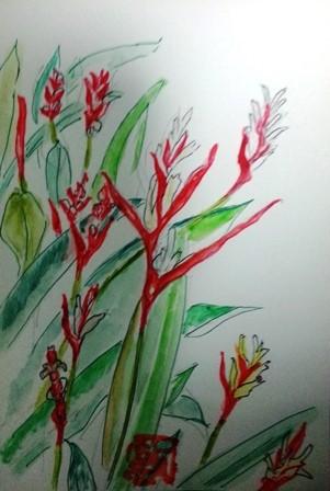 ストレリチアと思われる花の絵葉書